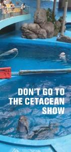 CCA Brochure Cover