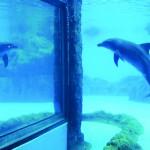 Dolphin in Captivity in China